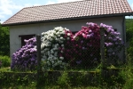 bloemen-sur-yonne