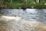 Rivier-zwemmen-sur-yonne